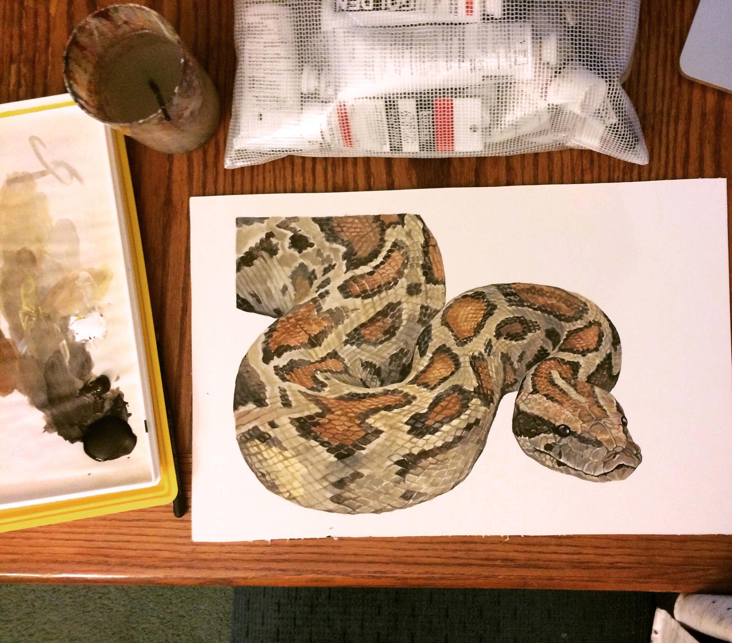 Open Wide Snake Diagram - Lindsey Kernodle Artwork